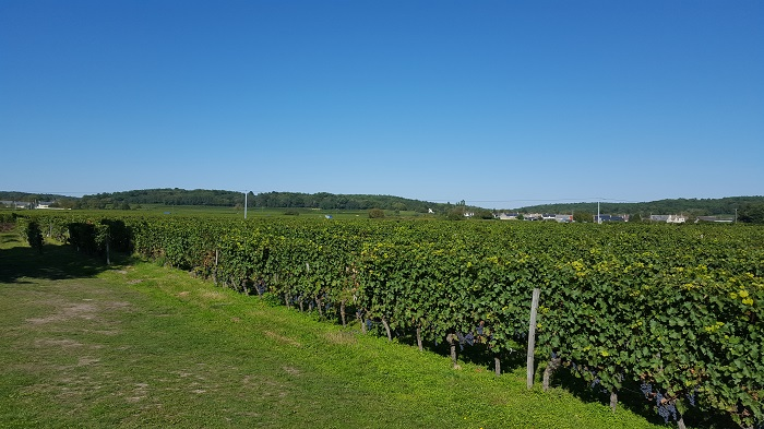 Vineyards of Bourgueil